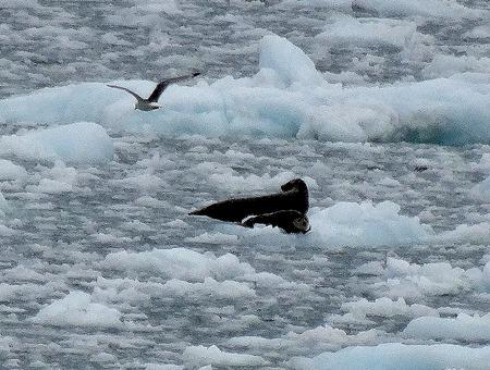 50. June 11 Glacier Bay