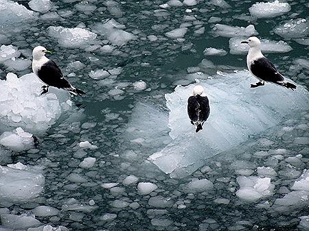 57. June 11 Glacier Bay