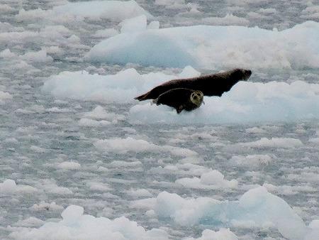 62. June 11 Glacier Bay
