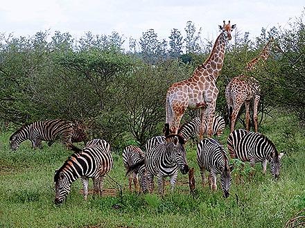 281. Kruger Nat Park, South Africa