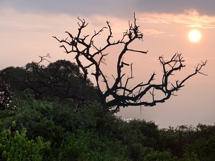 343a. Kruger Nat Park, South Africa_stitch