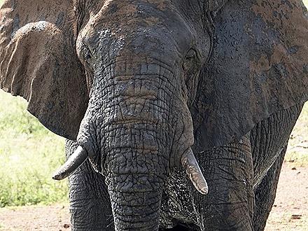 352. Kruger Nat Park, South Africa