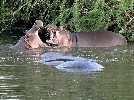 552. Kruger Nat Park, South Africa