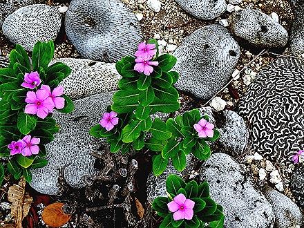 62. Grand Cayman