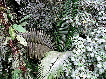 100.  Puerto Limon, Costa  Rica