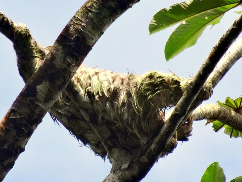 15.  Puerto Limon, Costa  Rica