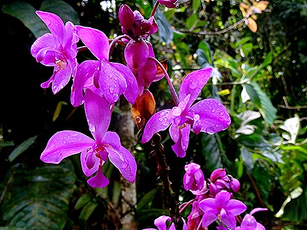 18.  Puerto Limon, Costa  Rica