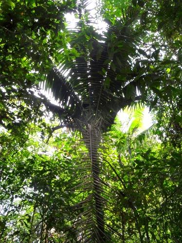 22.  Puerto Limon, Costa  Rica