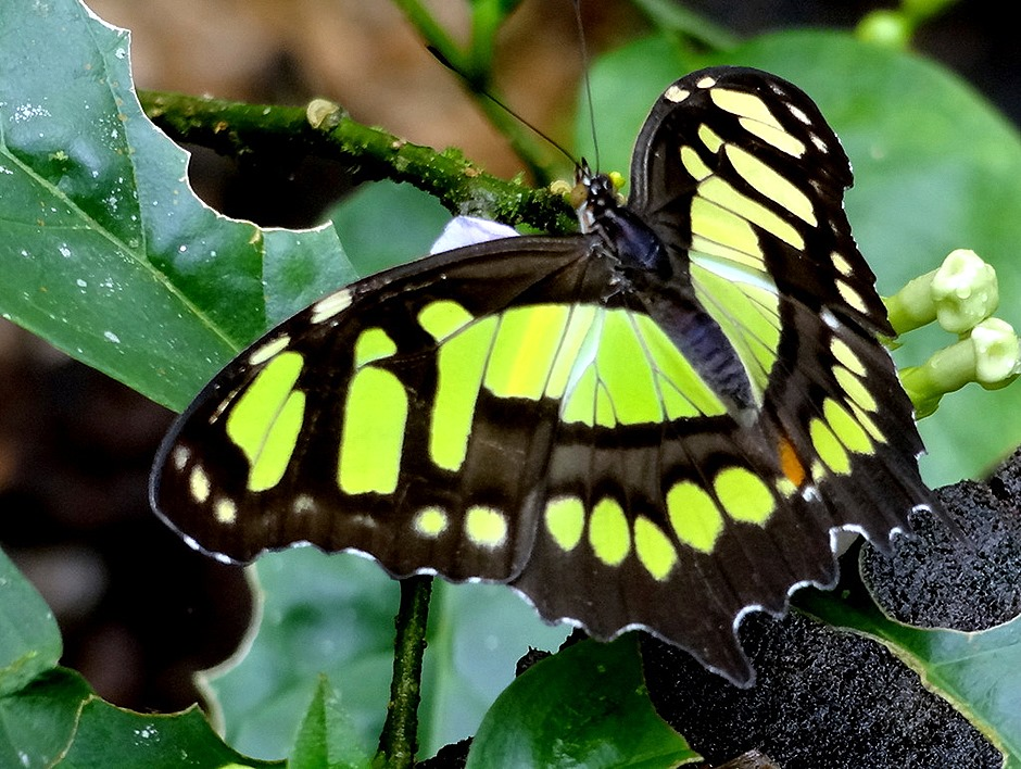 32.  Puerto Limon, Costa  Rica