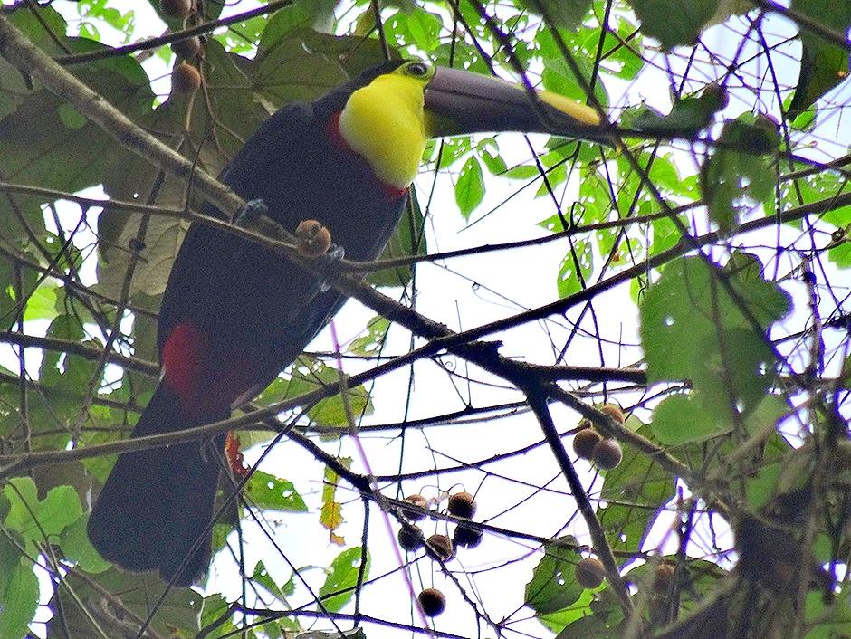 40.  Puerto Limon, Costa  Rica - Copy