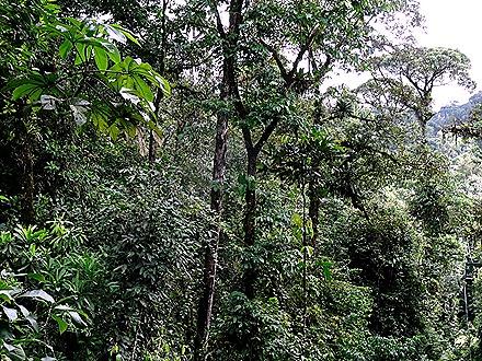 50.  Puerto Limon, Costa  Rica