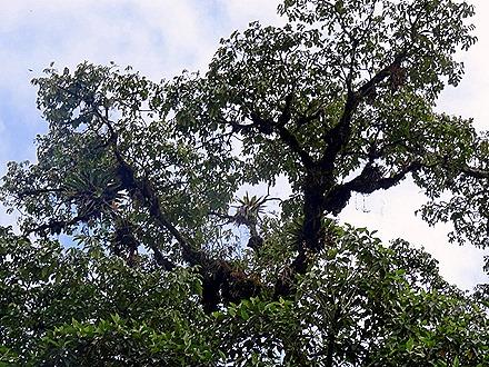 51.  Puerto Limon, Costa  Rica