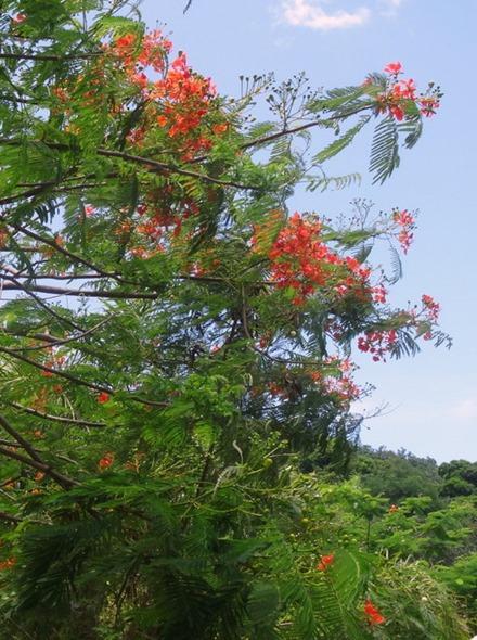 53. Opanuhu Bay, Moorea