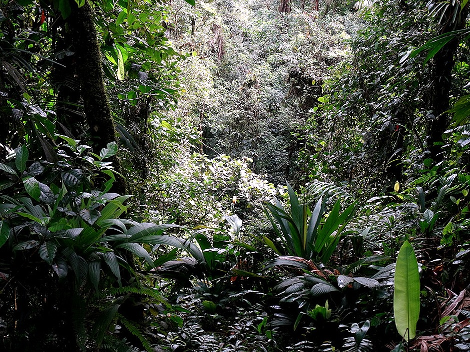 55.  Puerto Limon, Costa  Rica