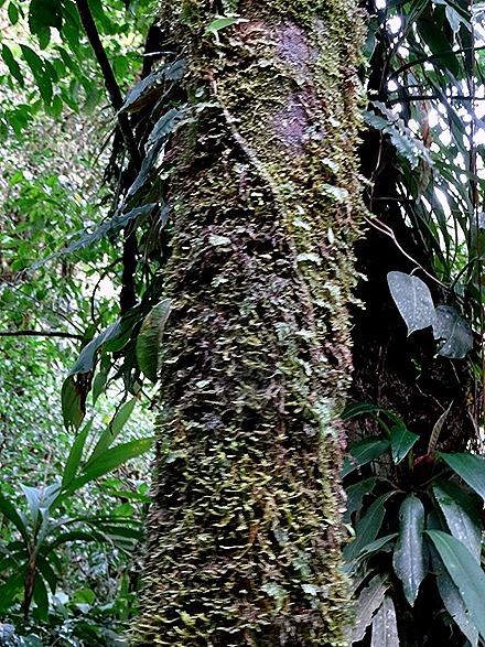 56.  Puerto Limon, Costa  Rica