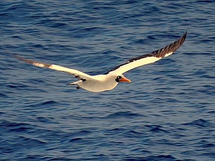 6. At Sea to Nuku Hiva