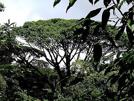 60.  Puerto Limon, Costa  Rica