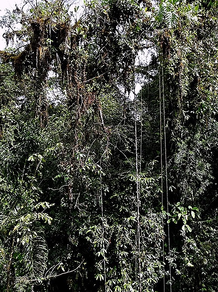 62.  Puerto Limon, Costa  Rica