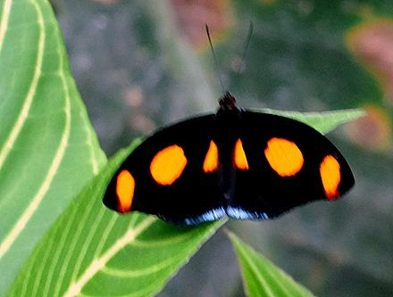 77.  Puerto Limon, Costa  Rica
