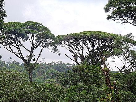 80.  Puerto Limon, Costa  Rica