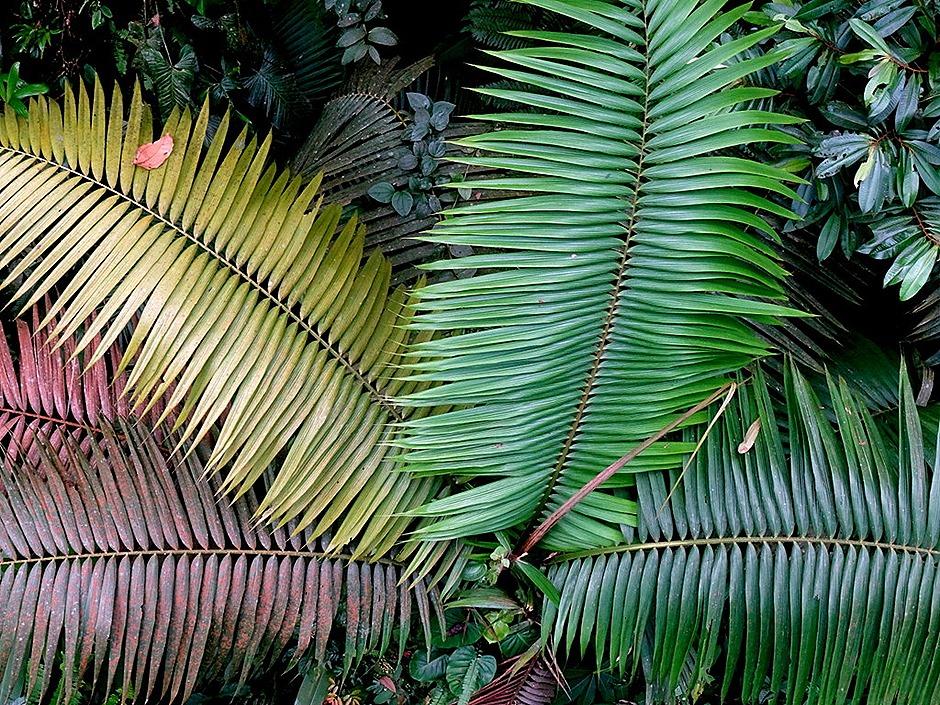 87.  Puerto Limon, Costa  Rica