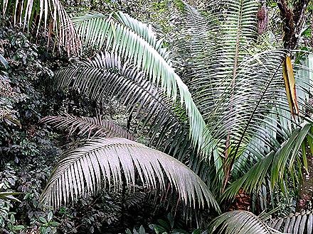 89.  Puerto Limon, Costa  Rica