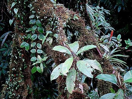 96.  Puerto Limon, Costa  Rica