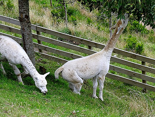 131. Tauranga (Rotarua), New Zealand