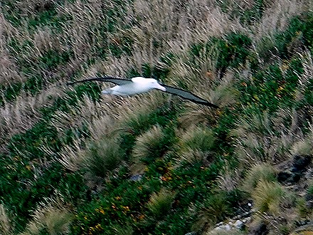 154. Dunedin, New Zealand