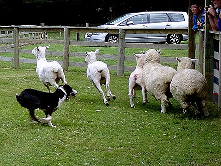 171. Tauranga (Rotarua), New Zealand
