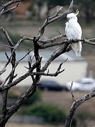 187. Hobart, Tasmania
