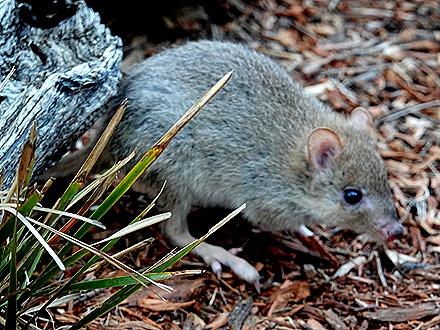 206. Hobart, Tasmania