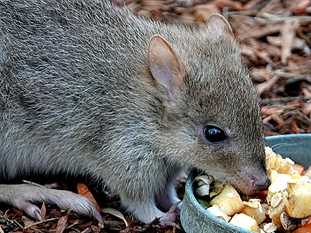 213. Hobart, Tasmania