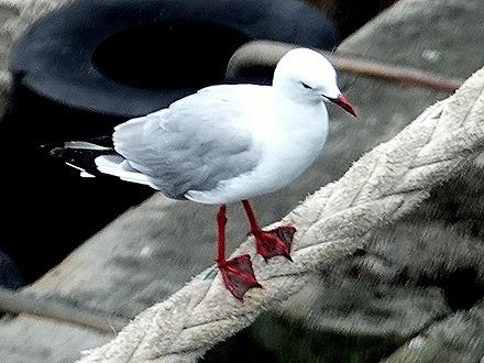 7. Tauranga (Rotarua), New Zealand
