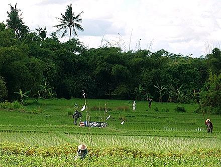 100. Benoa, Bali, Day 1