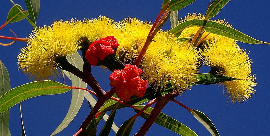 19. Freemantle, Australia