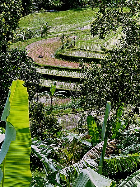 243a. Benoa, Bali, Day 1_stitch