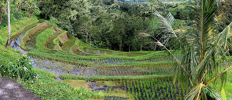 248a. Benoa, Bali, Day 1_stitch
