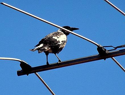 25. Freemantle, Australia