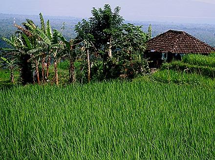 273. Benoa, Bali, Day 1