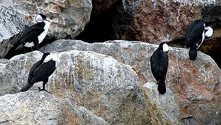 29. Penneshaw, Kangaroo Island