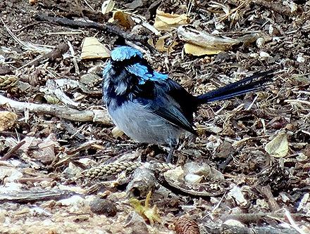 45. Penneshaw, Kangaroo Island