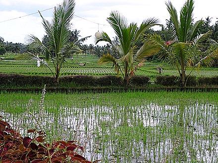 98. Benoa, Bali, Day 2