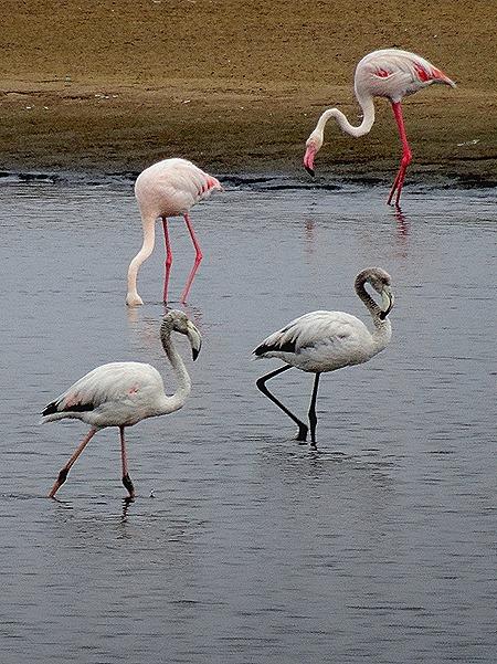 10. Walvis Bay, Namibia080418