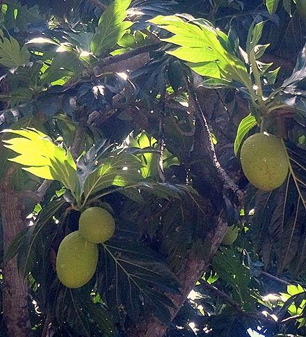 104. Victoria, Mahe, Seychelles