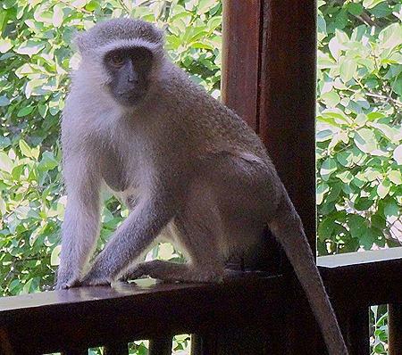 106. 010418Maputo, Mozambique & Kruger Nat Park, South Africa