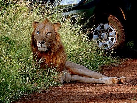 108. Kruger Nat Park, South Africa
