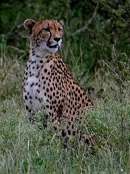 109. Kruger Nat Park, South Africa
