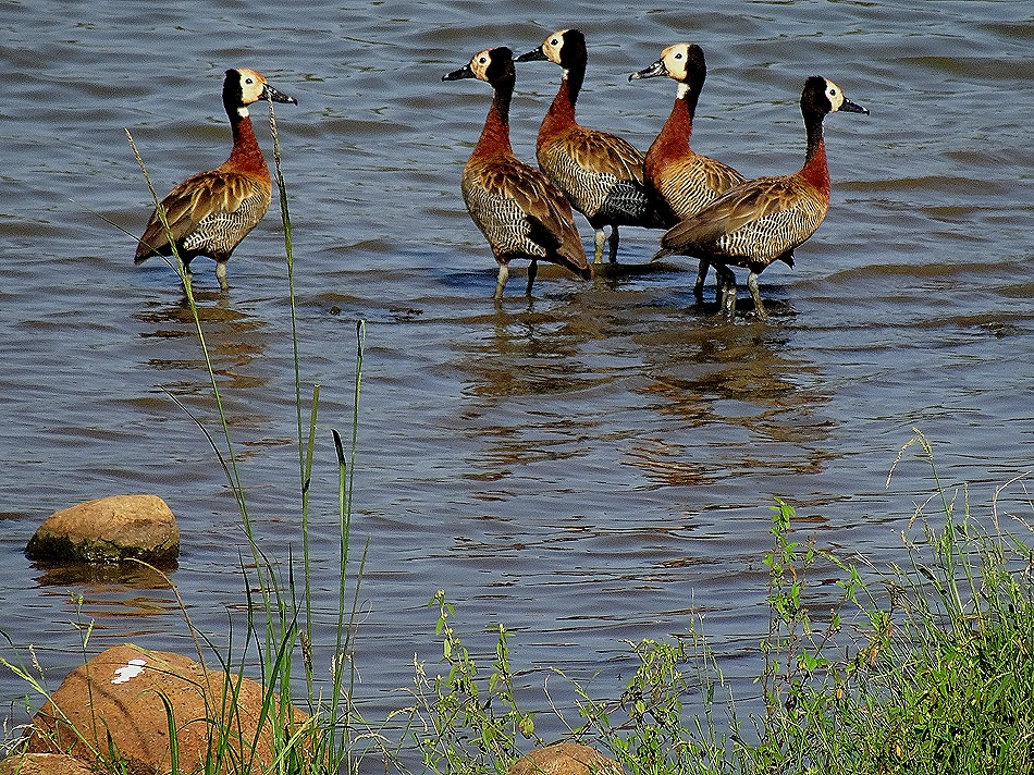 113. 010418Maputo, Mozambique & Kruger Nat Park, South Africa