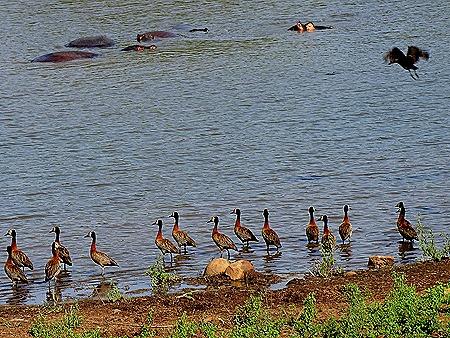 118. 010418Maputo, Mozambique & Kruger Nat Park, South Africa